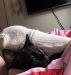 Click image for larger version.  Name:Ghost snuggled with beccy.jpg Views:21 Size:50.2 KB ID:35608